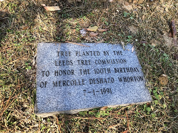 City of Leeds Tree Commission Project at Leeds Memorial Park 2019